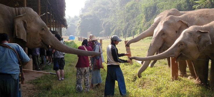 Elephants in Africa get a snack from a caretaker.